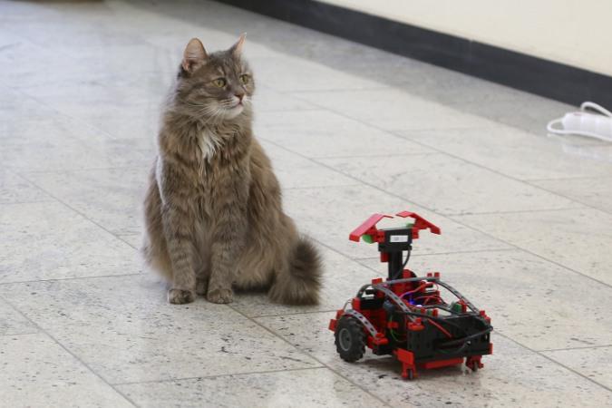 Робот и кошка Лиза